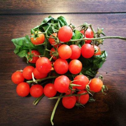 Tomates Orgánicos de la Huerta